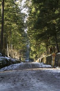 雪の杉並木の写真素材 [FYI00186126]