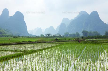 初夏の桂林にての写真素材 [FYI00186152]