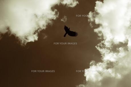 鳥 空 雲の素材 [FYI00186315]