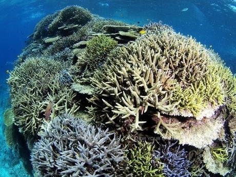 沖縄の元気な珊瑚礁の写真素材 [FYI00186349]