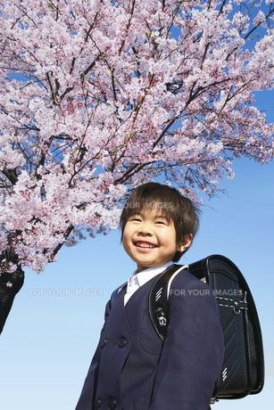 小学校に入学する男の子と桜の写真素材 [FYI00186473]