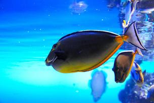 3Dのような魚たちの素材 [FYI00186583]