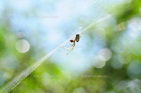 春の玉ボケの中での写真素材 [FYI00186587]