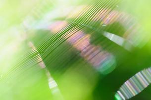 光り輝く蜘蛛の巣の写真素材 [FYI00186599]