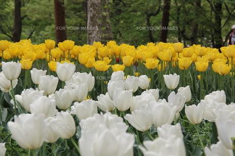 武蔵丘陵森林公園の素材 [FYI00186736]