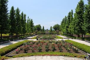 秋留台公園のバラの写真素材 [FYI00186762]