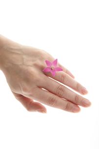 結婚指輪の写真素材 [FYI00186793]