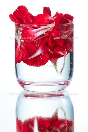 花の浮くタンブラーの写真素材 [FYI00186828]