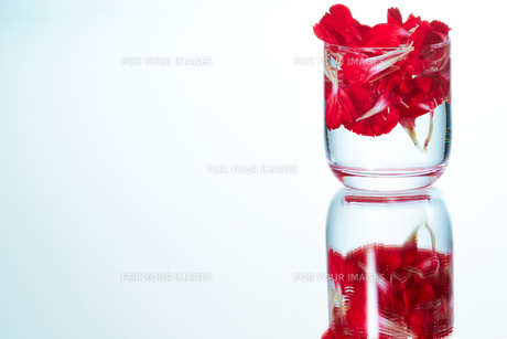 花の浮くタンブラーの写真素材 [FYI00186830]