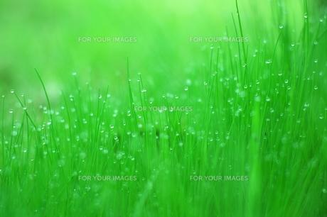 雨上がりの緑の素材 [FYI00186860]