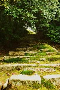 森への階段の素材 [FYI00186880]