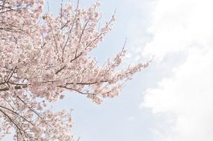 春の素材 [FYI00186910]