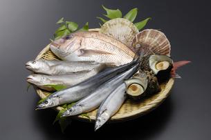 魚貝の写真素材 [FYI00187051]