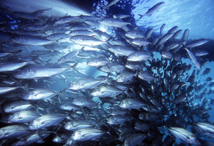 Fish Streamの写真素材 [FYI00187901]