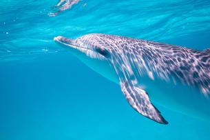 Swim with Dolphinの写真素材 [FYI00187908]