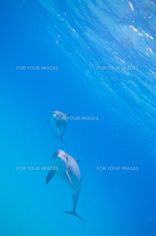イルカのお誘いの写真素材 [FYI00187933]