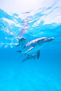 イルカの親子の写真素材 [FYI00187934]