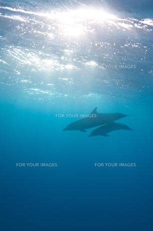 イルカのシルエットの写真素材 [FYI00187939]