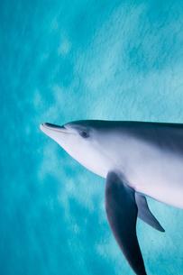 イルカと泳ぐの写真素材 [FYI00187960]