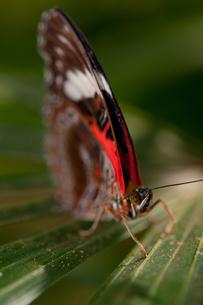 熱帯地方の蝶の写真素材 [FYI00187961]