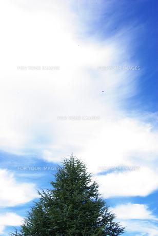 青と緑の風景の写真素材 [FYI00188106]