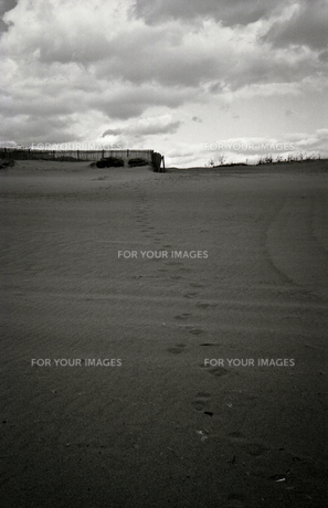 砂丘の足跡の写真素材 [FYI00188193]