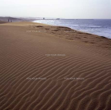 鳥取砂丘の写真素材 [FYI00188248]