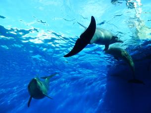 イルカの世界の写真素材 [FYI00188324]
