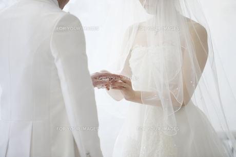 指輪交換 結婚式 新郎新婦の写真素材 [FYI00188394]