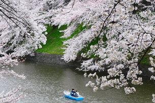 満開 桜 ボート カップル 千鳥ヶ淵の写真素材 [FYI00188412]
