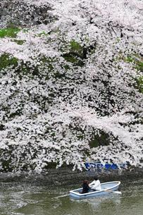 満開の桜の中のボートとカップルの写真素材 [FYI00188418]