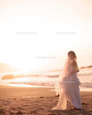 花嫁の写真素材 [FYI00188520]