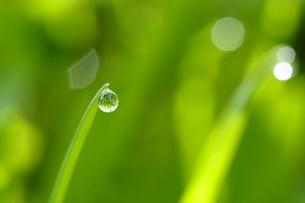 水滴の写真素材 [FYI00188568]