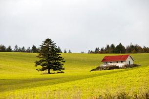 赤い屋根の小屋の写真素材 [FYI00188613]