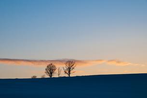 夕暮れの3本の木の写真素材 [FYI00188631]