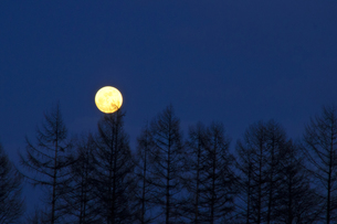 カラマツと満月の写真素材 [FYI00188639]