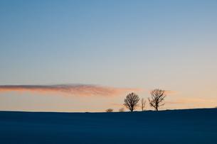 夕暮れの3本の木の写真素材 [FYI00188640]