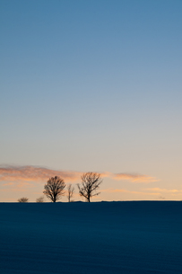 夕暮れの3本の木の写真素材 [FYI00188642]