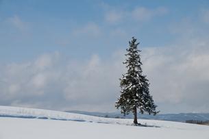 雪原に立つ一本の木の写真素材 [FYI00188649]