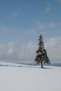 雪原に立つ一本の木の写真素材 [FYI00188656]