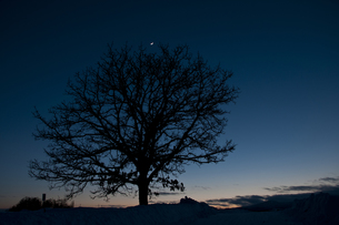 三日月と柏の木の写真素材 [FYI00188666]
