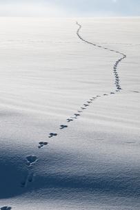 雪上の足跡の素材 [FYI00188672]