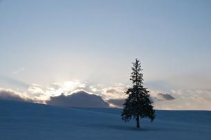 夕暮れの丘に立つ木の写真素材 [FYI00188692]