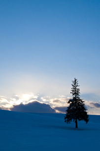 夕暮れと一本の木の写真素材 [FYI00188696]