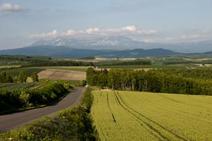 大雪山と麦畑の写真素材 [FYI00188746]