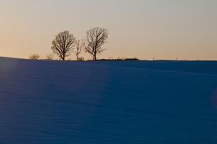 夕暮れの丘にに立つ木の写真素材 [FYI00188787]