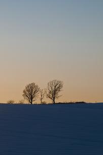 夕暮れの丘に立つ木の写真素材 [FYI00188789]