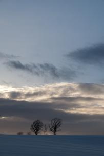 夕暮れの丘に立つ三本の木の写真素材 [FYI00188829]