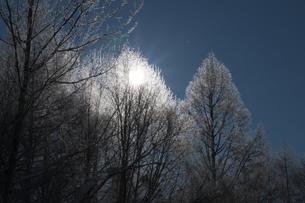 輝く霧氷の写真素材 [FYI00188840]