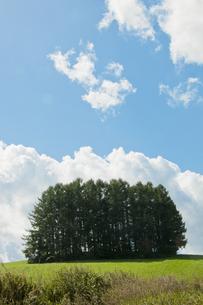 丘の上の松林の写真素材 [FYI00188850]